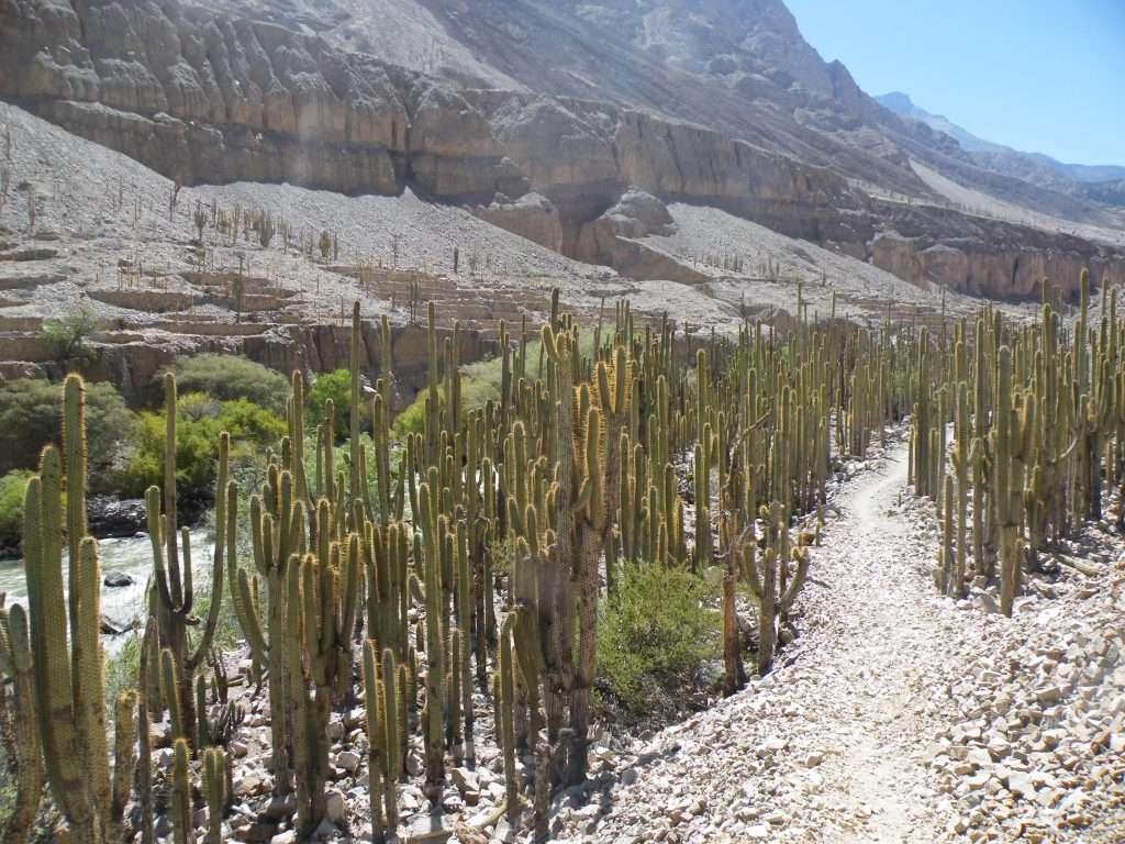 Canyon del Cotahuasi: trekking in Perù lontano dai percorsi turistici