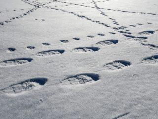 10 consigli per godere al massimo di un'escursione con le ciaspole